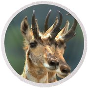 Lamar Valley Pronghorn Duo Round Beach Towel