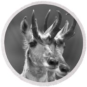 Lamar Valley Pronghorn Duo Black And White Round Beach Towel