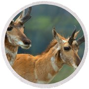 Lamar Valley Pronghorn Landscape Round Beach Towel