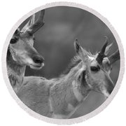 Lamar Valley Pronghorn Landscape Black And White Round Beach Towel