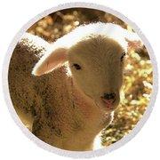 Lamb All Aglow Round Beach Towel