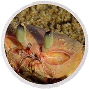Lamu Island - Crab - Close Up 1 Round Beach Towel