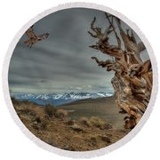 Landing On Bristlecone Pine Round Beach Towel