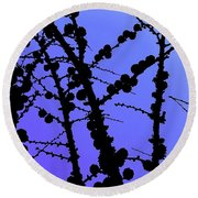 Larch Cones Against The Sky Round Beach Towel