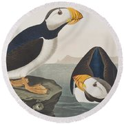 Large Billed Puffin Round Beach Towel by John James Audubon
