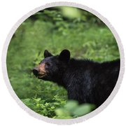 Round Beach Towel featuring the photograph Large Black Bear by Andrea Silies