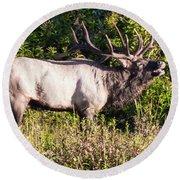 Large Bull Elk Bugling Round Beach Towel