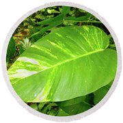 Round Beach Towel featuring the photograph Large Leaf by Francesca Mackenney