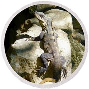 Round Beach Towel featuring the photograph Large Lizard M by Francesca Mackenney