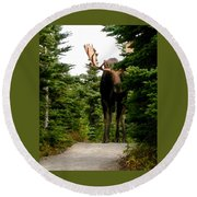 Large Moose Round Beach Towel