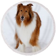 Lassie Enjoying The Snow Round Beach Towel
