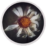 Round Beach Towel featuring the photograph Last Dance by Amy Weiss