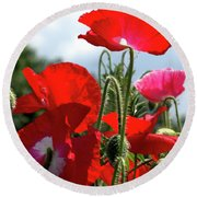 Round Beach Towel featuring the photograph Last Poppies Of Summer by Baggieoldboy