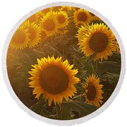 Late Afternoon Golden Glow Round Beach Towel