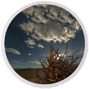 Late Afternoon In The Bristlecone Forest Round Beach Towel