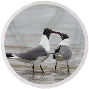 Laughing Gulls In Love Round Beach Towel