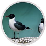 Round Beach Towel featuring the photograph Laughing Gulls by Sally Weigand