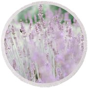 Round Beach Towel featuring the photograph Lavender 6 by Andrea Anderegg