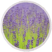 Round Beach Towel featuring the photograph Lavender Fantasy by Jani Freimann