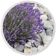 Lavender Flower In The Garden,park,backyard,meadow Blossom In Th Round Beach Towel