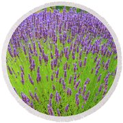 Round Beach Towel featuring the photograph Lavender Gathering by Ken Stanback