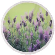 Round Beach Towel featuring the photograph Lavender by Keith Hawley