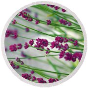 Round Beach Towel featuring the photograph Lavender by Susanne Van Hulst