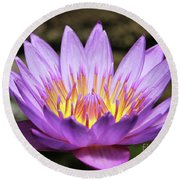 Lavender Water Lily #3 Round Beach Towel