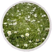 Lawn Of Daisies Round Beach Towel