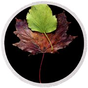 Round Beach Towel featuring the photograph Leaf 15 by David J Bookbinder