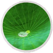 Leaf Cupping A Giant Water Drop Round Beach Towel