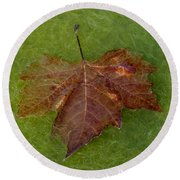 Leaf On Algae Round Beach Towel