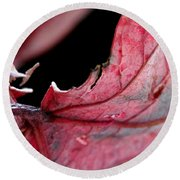 Leaf Study I Round Beach Towel