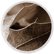 Leaf Study In Sepia II Round Beach Towel