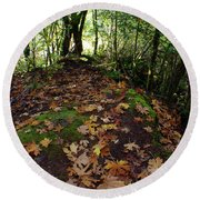 Leafy Clearing Round Beach Towel by Adria Trail