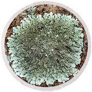 Leafy Lichen Round Beach Towel