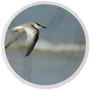 Least Tern Round Beach Towel