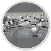Least Terns Round Beach Towel by Melinda Saminski