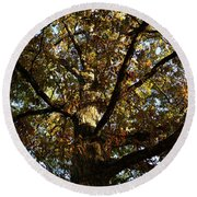 Leaves And Branches Round Beach Towel