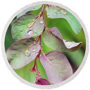 Leaves And Raindrops Round Beach Towel