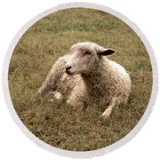 Leicester Sheep In The Dewy Grass Round Beach Towel