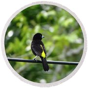 Lemon-rumped Tanager Round Beach Towel