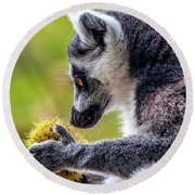 Lemur And Sweet Chestnut Round Beach Towel