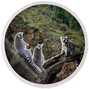 Lemur Family Round Beach Towel