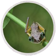 Round Beach Towel featuring the photograph Lemur Tree Frog - 1 by Nikolyn McDonald