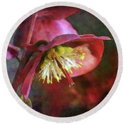 Lenten Rose Bowing To The Sun 8712 Idp_2 Round Beach Towel