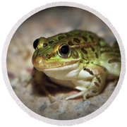 Round Beach Towel featuring the photograph Leopard Frog by Elaine Malott