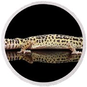 Leopard Gecko Eublepharis Macularius Isolated On Black Background Round Beach Towel by Sergey Taran