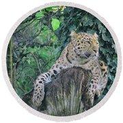 Leopard Lookout Round Beach Towel