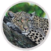 Leopard On Branch Round Beach Towel